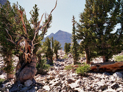 Great Basin National Park