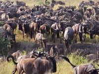 Serengeti Safari And Wildlife Tours