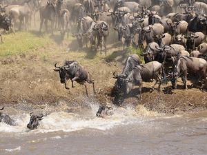 Masai Mara Wildebeest Migration Tour Photos