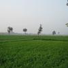 Green Farms Of Jats