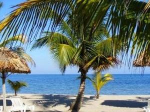 Green Parrot Beach Houses & Resort
