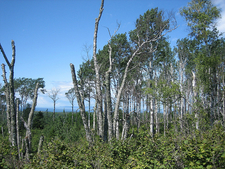 Greenstone Ridge Trail