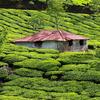 Exotic Kerala 11 Days