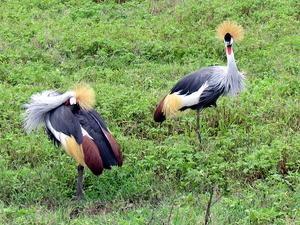 Wildlife Adventure Safari Fotos