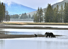 Grizzly Lake - Wyoming