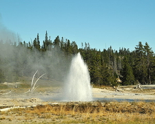 Grotto Fountain Geyser - Yellowstone - USA