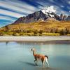 Torres del Paine: Trek en la Patagonia
