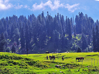 6 Nights 7 Days Kashmir