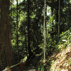Gunung Stong State Park - Forested Area