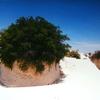 Gypsum Plant Stand
