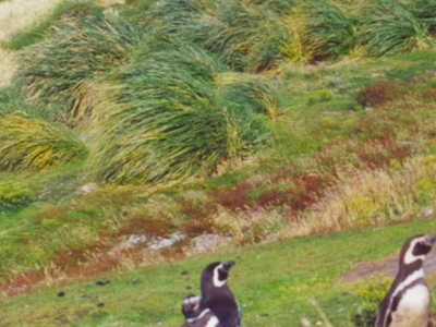 Gypsy Cove - Falkland Islands