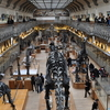 The Gallery Of Paleontology