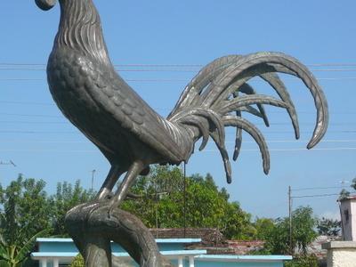 Gallo De  Moron