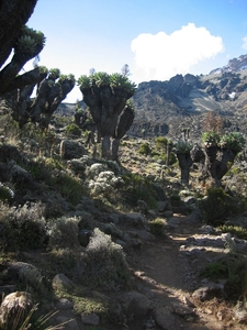 Garden Of The Senecios