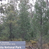 Garrawilla Parque Nacional