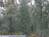Garrawilla National Park