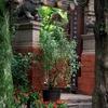 Golden Temple Parque