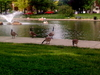 Geese At Goodale Park