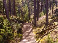Gotska Sandön National Park