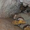 Caver Crawling Through Honeycomb Hill Cave