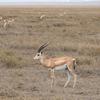 Nechisar National Park