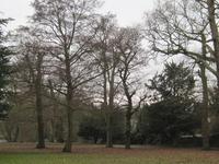 Greenhill Gardens