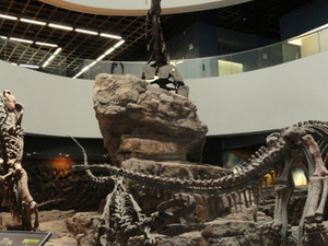 Museo de Historia Natural de Kunming de Zoología