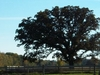 Half   Way  Tree