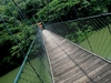 Hanging Bridge From Thenmala