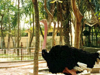 Hanói Jardim Zoológico