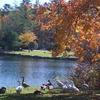 Harris Lake