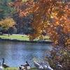 Harris Lake Highlands