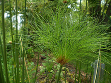 Harry P. Leu Gardens Plantlife