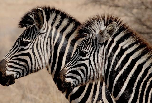 5 Day Etosha Nature Reserve Safari Photos