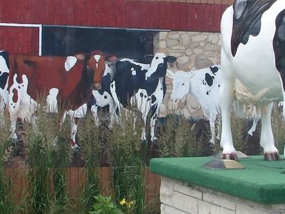 Harvard Il Cow