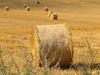 Harvested  Land On  Grange
