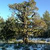 Hat Creek California