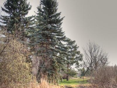 Streambed In Hawrelak Park