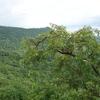 Healing Flora Of Kabirdham