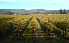 Heitz Wine Cellars Vineyards