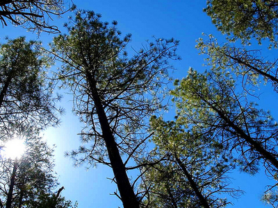 Hellsgate Wilderness - Tonto National Forest