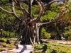 Henderson Island Shelter