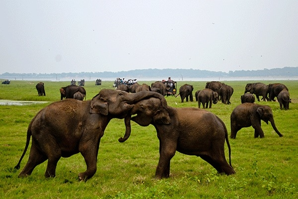 Heritage And Elephants In Sri Lanka 5 Days Tour Photos