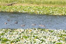 Heron Pond Swan Lake Trailviews - Grand Tetons - Wyoming - USA
