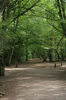 Highgate Wood