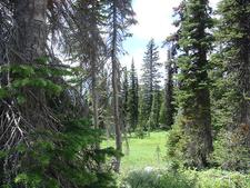 Highline And Granite Park Chalet Trail - Glacier - Montana - USA