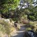 Hiking Trail In Mount Tamalpais State Park