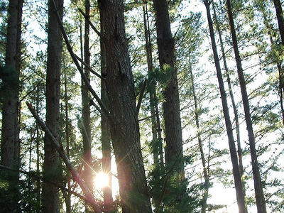 Hinau Walk - Te Urewera National Park - New Zealand