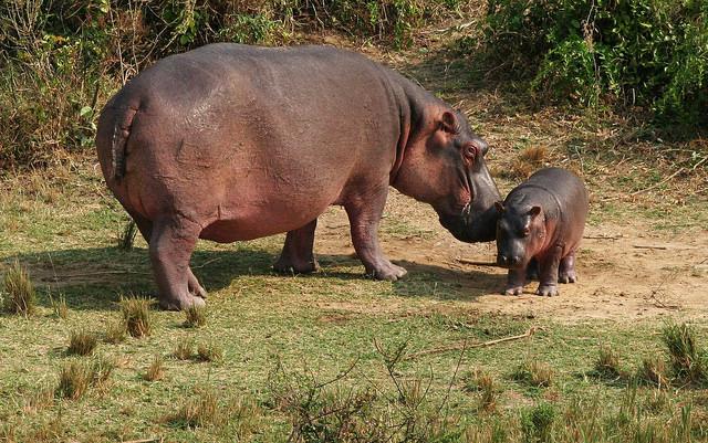 Rafting and Wildlife Safari Uganda Photos