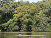 Hippos In Outamba-Kilimi National Park